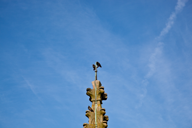 Starlings resting on the tower pillars of St Laurence's Church,