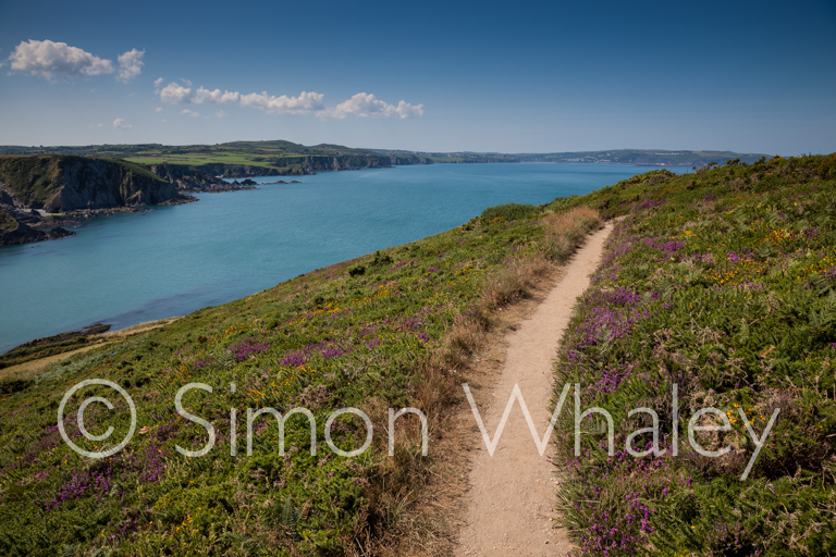 The Pembrokeshire Coast Path, with Fishguard Harbour in the distance.
